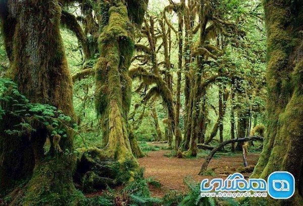 جنگل انجیلی، افسون طبیعت