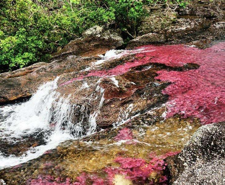 دریاچه رنگین کمان Cano Cristales - کلمبیا
