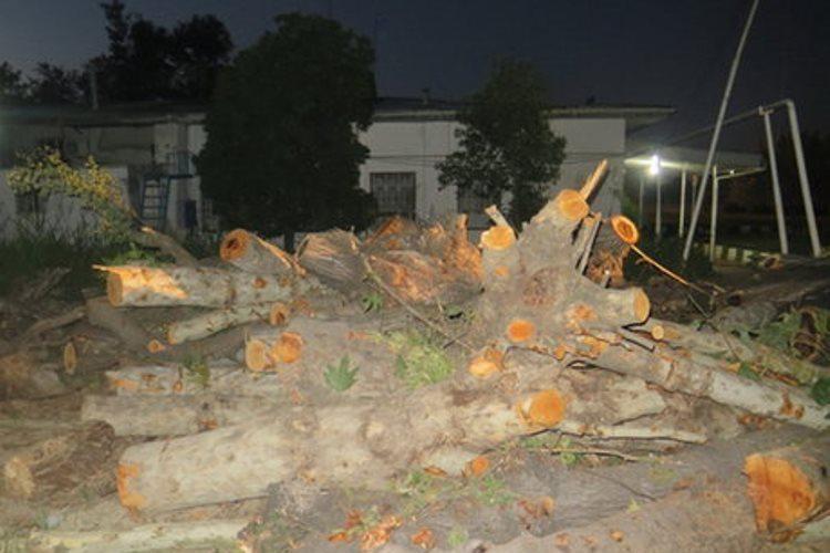 ماجرای قطع درختان خیابان امام خمینی رشت