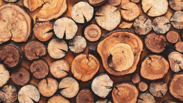 گرانترین و کمیاب ترین چوب های جهان
